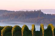 WillaKenzie Estate Vineyards, Yamhill-Carlton, Willamette Valley, Oregon