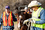 16 MARCH 2010 -- BUCKEYE, AZ: Vickie and Mark Eshenbaugh walk Colorado back from the helicopter near Buckeye Tuesday morning. Colorado has spent the last several days marooned on a sandbar in the middle of the river after he and his owners were nearly swept downstream during a trail ride. PHOTO BY JACK KURTZ