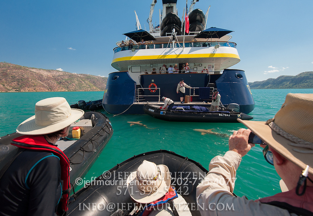 tourists watch from zodiacs as tawny nurse sharks swim just under the surface behind the stern of the National Geographic Orion in Talbot Bay.