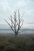 ground fog on heath at dawn with dead tree