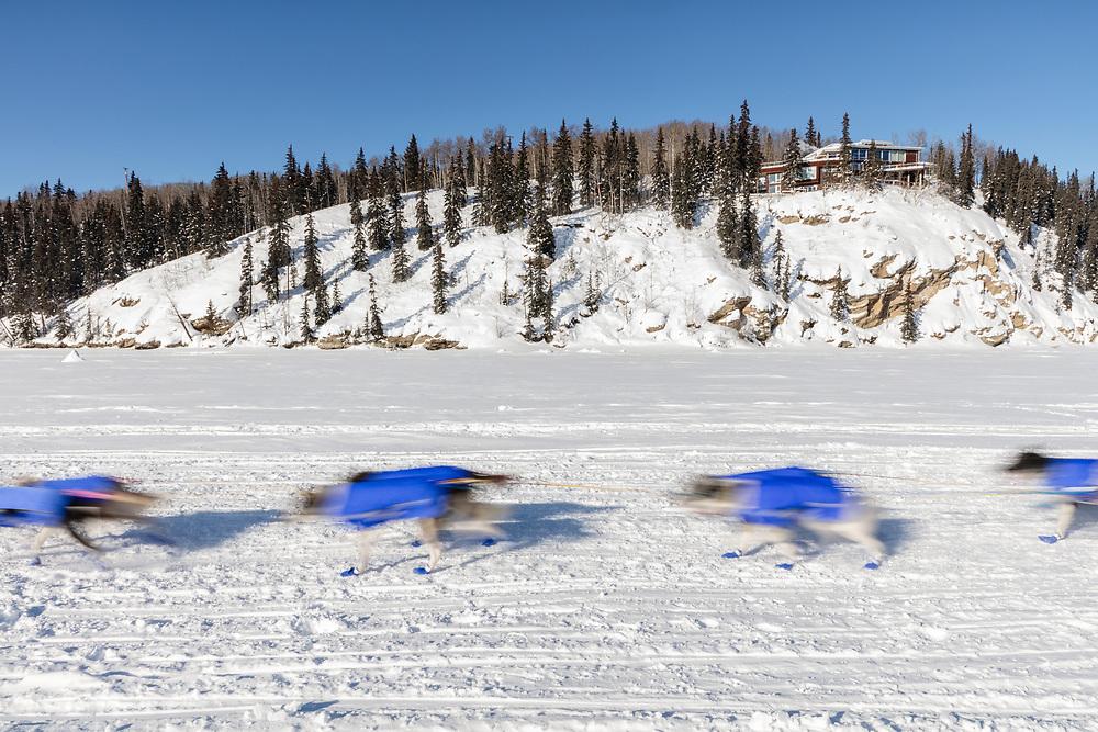 Motion blur of  sled dogs competing in the 45rd Iditarod Trail Sled Dog Race on the Chena River after leaving the restart in Fairbanks in Interior Alaska.  Afternoon. Winter.