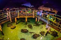 Reef sharks circling under the Toatea restaurant, Hilton Moorea Lagoon Resort, island of Moorea, French Polynesia.
