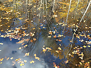 Fall trees reflected in a lake busy with fallen leaves.