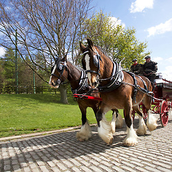 Beamish Museum  Horses at Work 2017