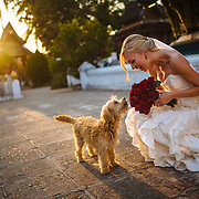Alex meets a stray dog at a temple on her wedding day in Luang Prabang, Laos