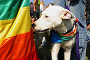 A dog in the Gay Pride Parade