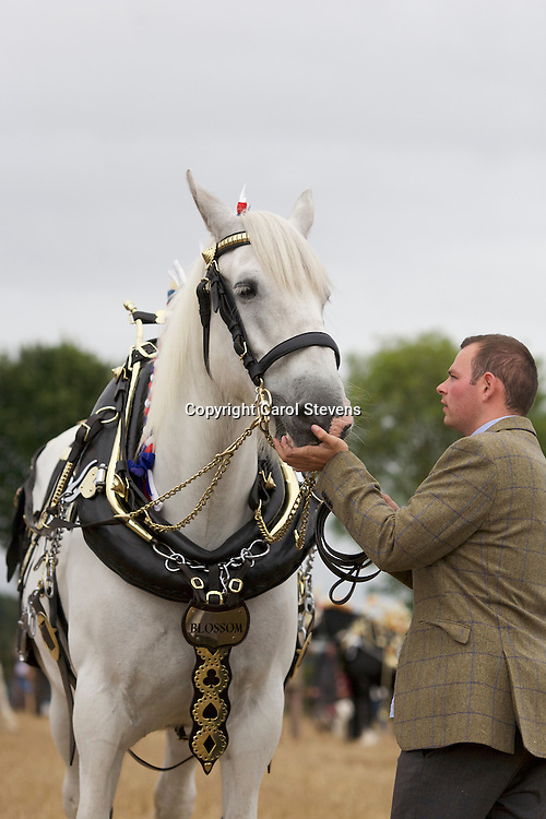European Horse Ploughing Competition 2016 National Horse Ploughing Competition and Demonstrations 2016<br /> Adam Atkin