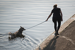 © Licensed to London News Pictures. 15/09/2016. London, UK. A dog takes an early morning dip in The Serpentine in Hyde Park. Another exceptionally warm Autumn day is expected today in parts of the United Kingdom. Photo credit: Ben Cawthra/LNP