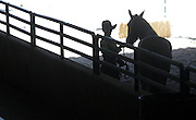 A 4-H competitor in the senior horse showmanship enters the arena at the Washington State Fair in Puyallup. (Alan Berner / The Seattle Times)