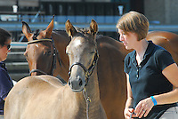 TB & NonTB Hunter Breed Day 2015