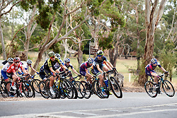 The peloton happy to let the break go on Stage 1 of 2020 Santos Women's Tour Down Under, a 116.3 km road race from Hahndorf to Macclesfield, Australia on January 16, 2020. Photo by Sean Robinson/velofocus.com