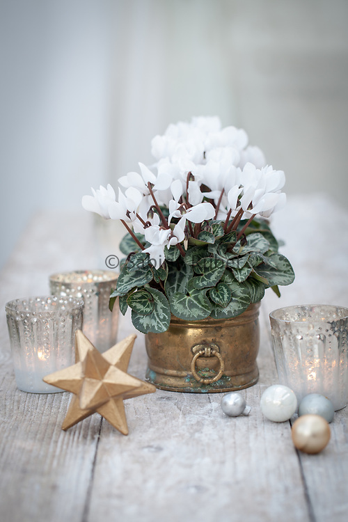 Cyclamen table decoration with silvered glass tealights, star and glass baubles