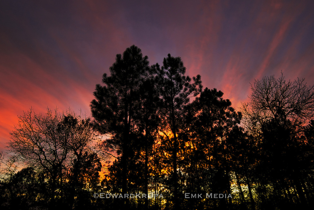 Sunset through trees in South Carolina, USA.