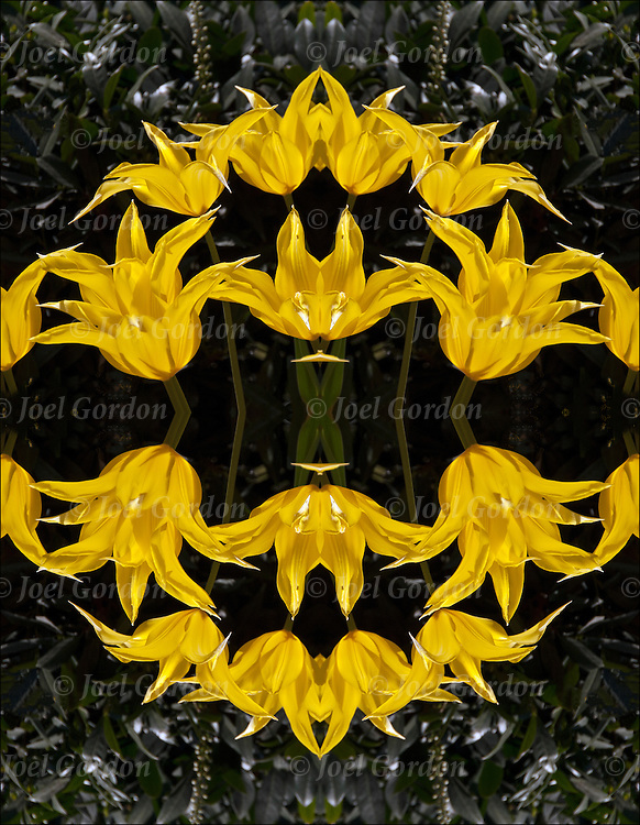 Computer enhanced abstract of repeating shapes and patterns of yellow flora in outdoor garden columns of building. <br /> <br /> Two or more layers were used to enhance, alter, manipulate the image, creating an abstract surrealistic mirrored symmetry.