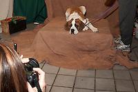 Prescotts Pet Portraits with Ambiant Photography.