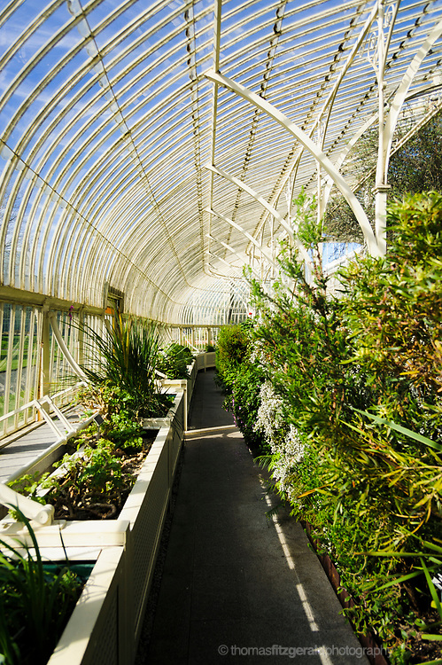 Inside the Ornate Greenhouses with lots of plants at the Botanic Gardens, Dublin