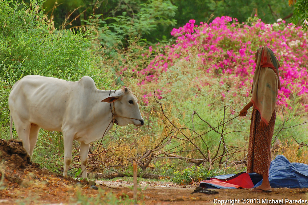A woman stands with her cow near Bagan, Burma (Myanmar)