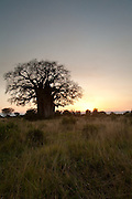 Baobab sunset, Tarangire National Park, Tanzania