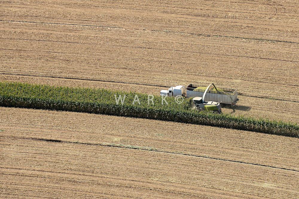 Corn harvest near Amarillo, Texas.  Sept 2013. 84056