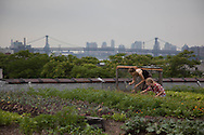 New York , Brooklyn Eagle street rooftop farm is a commercial organic farm located on New York City rooftops in Brooklyn