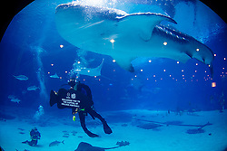General images during the ESPN College Football Awards Finalist Reception at the Georgia Aquarium on Wednesday, December 7, 2016, in Atlanta. (Paul Abell/Abell Images for Chick-fil-A Peach Bowl)