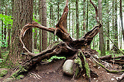 Enchanted Forest in Lynn Valley