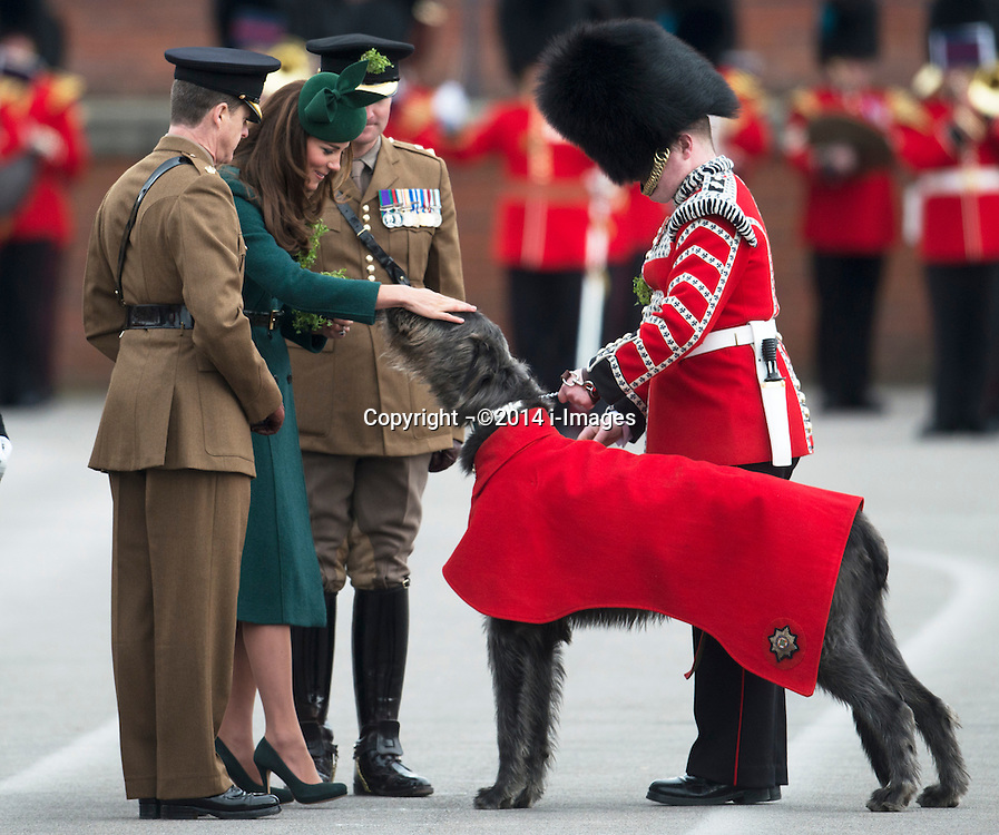 The Duchess of Cambridge presents a shamrock to the Irish Wolf Hound regimental mascot at the Irish Guards' St.Patrick's Day Parade in Aldershot, United Kingdom. Monday, 17th March 2014. Picture by i-Images