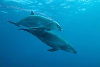 Bottlenose Dolphins <br /> <br /> Shot in Mexico