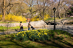 New York City, New York: Spring time with blossoms in Central Park  .Photo #: ny263-14716  .Photo copyright Lee Foster, www.fostertravel.com, lee@fostertravel.com, 510-549-2202.