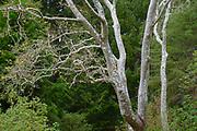 April Season Trees, Finley Botanical Gardens, Berkeley, California