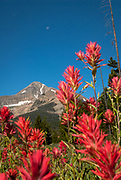 Indian Paintbrush, a moon , a robin and Lone Peak in Big Sky Montana.
