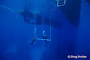 safety stop under the Spoil Sport, Coral Sea, Australia, showing 200+ foot visibility ( Western Pacific Ocean ) MR 204 MR 207