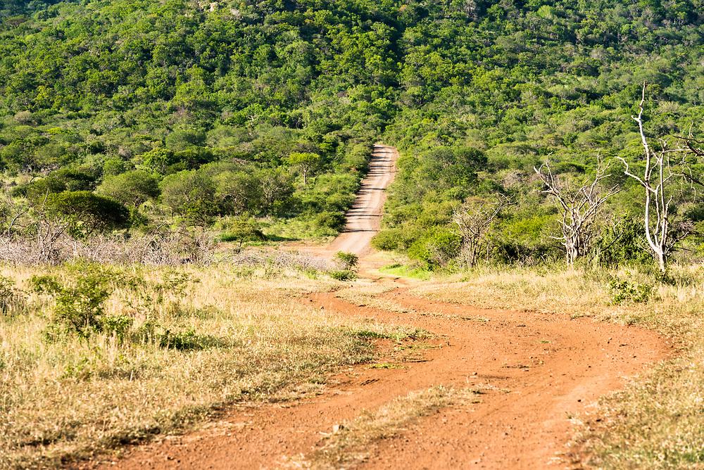 A path through African bush country