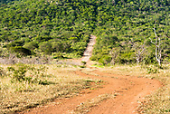 A path through African bush country