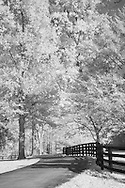 Road at Keeneland in Lexington, KY.  Infrared (IR) photograph by fine art photographer Michael Kloth. Black and white infrared photographs