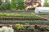 Herbs and Barn