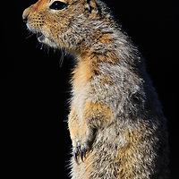 Rodents & Lagomorphs