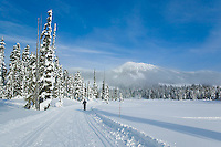 Track set cross-country ski trails in Paradise meadows at Mount Washington attract family and competitive skiers alike.  Mount Washington, Comox Valley, Vancouver Island, British Columbia, Canada.