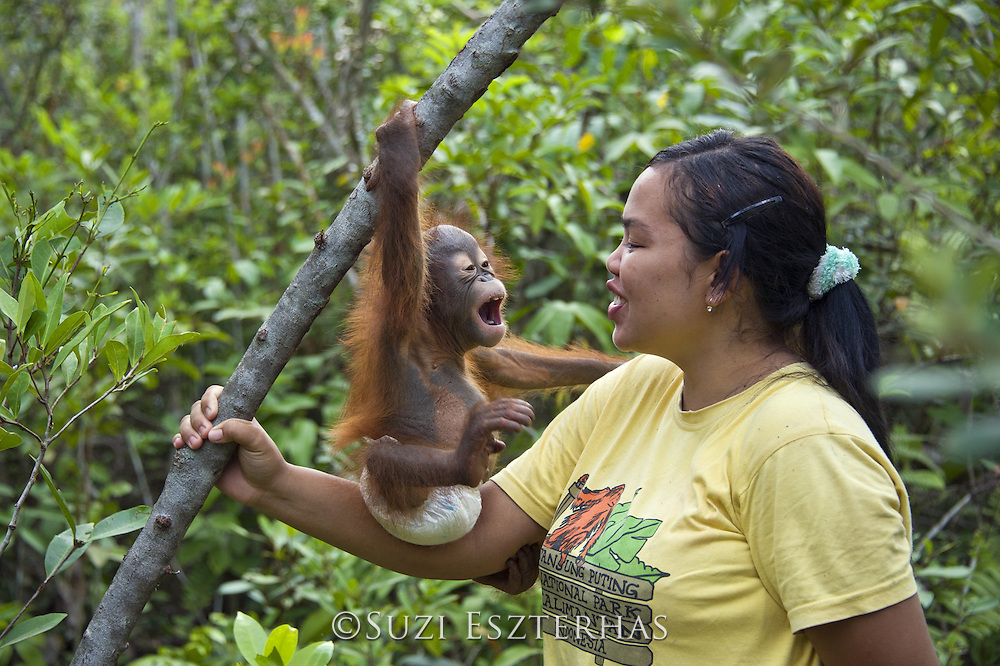 Bornean Orangutan<br />