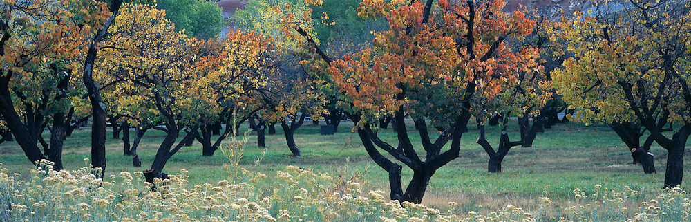 Capital Reef Fruit Orchard