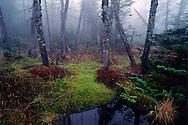 Adirondack Park, Lake Tear of the Clouds, New York, Hudson River