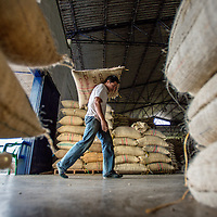 March, 21, 2014 - Coffee beans from local farmers are carried in by hand as Coffee processed and stored for world-wide shipment at a co-op, Coopertiva de Caficultores de Andes in the town of Jardin in the Department Antioquia region of Colombia.<br /> Story Summary:<br /> Deep in the verdant valleys of Colombia&rsquo;s Department Antioquia region is Fabio Alonso Reyes Cano&rsquo;s coffee finca. Finca La Siemeona has been in Cano&rsquo;s family for generations. <br /> He and two workers farm the 5-acres of land as his ancestors did, bean by bean.  It is a tradition that has dwindled amid modern day farming techniques that harvest quicker but the selectively picked ripe deep red cherries are picked individually by hand for the best quality. &lsquo;Grain by grain&rsquo; processing allows for greater control over that quality of one of Colombia&rsquo;s top exports.  It also may help save an industry that is seeing firsthand the effects of climate change.<br /> Cano takes pride in the organic process, which he practices out of respect for nature and the land he was born and raised on.  A businessman, Cano keeps his eyes on way to grow but he also takes seriously his role as steward, encouraging biodiversity and employing natural pest control on the finca.  His practices are at odds with other coffee farmers, who have adopted more industrialized techniques. <br /> Climate change threatens a way of life that supports about 92,000 families nationwide and serves as one of Colombia&rsquo;s economic backbones.  Colombian coffee production has declined in recent years due to regional climate change associated with global warming as both the average temperatures have risen and an increase in rainfall.  The trend disrupts the specific climate requirements to grow the Coffea Arabica bean, and a way of life. (Credit Image: &copy; Eric Reed/ZUMAPRESS.com)