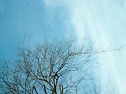 Nature-trees