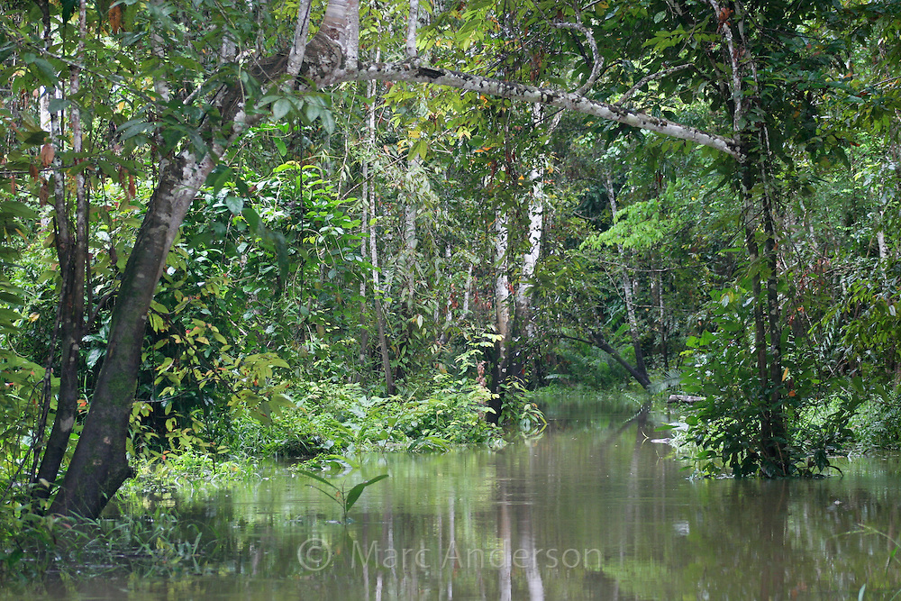Flooded rainforest during the rainy season, Kinabatangan River, Sabah, Malaysia