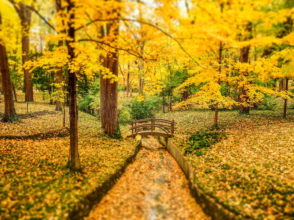 Fall scene. 2015.