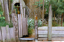 Front gate and fence made out of reclaimed timber in Biddy Bunzl's front garden. Planting includes Pseudopanex crassifolius and Astelia chathamica 'Silver Spear'