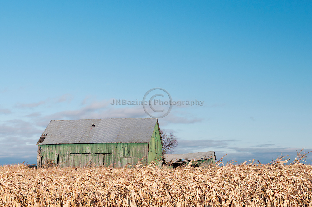 Old green barn in corn field