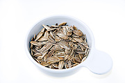 Sunflower seeds (Helianthus annuus) in shell. on white background