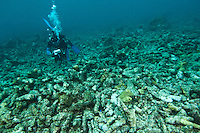 Diver with a video camera filming a reef destroyed by fish bombing, Biak, West Papua, Indonesia.