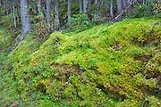 Moss on trail along Upper Kananaskis Lake<br />Kananaskis Coutnry<br />Alberta<br />Canada